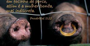 Provérbios 11:22,Assine o Devocional Para Hoje